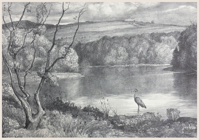 Water Heron